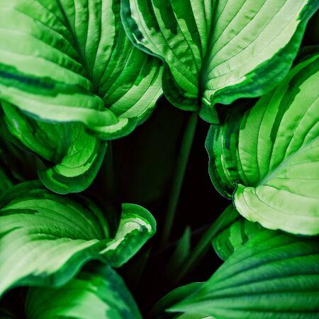 hebraism: love green. Minimalism details