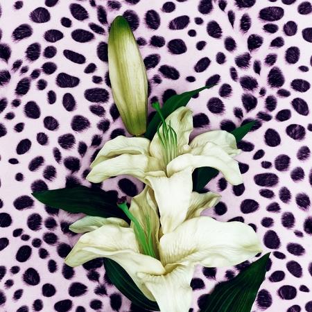 Flower Lily on fashion animal background. Minimalism Stock Photo