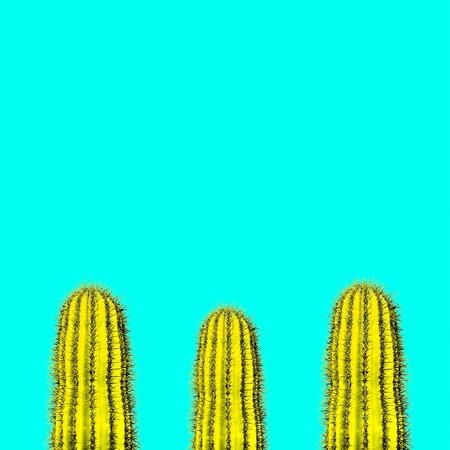 Cactus set. Minimal creative stillife