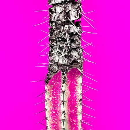Fuchsia Cactus Minimal creative idea Fashion design art Stock Photo