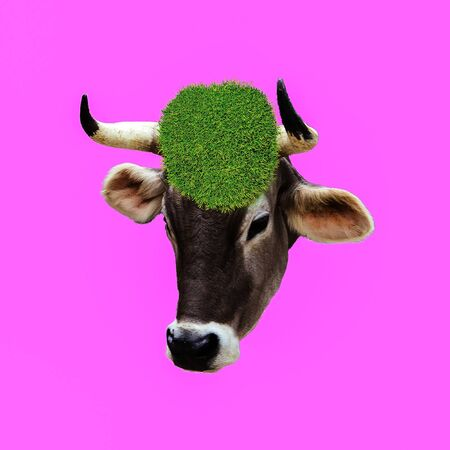 Fashion collage minimal. Photo manipulation. Cow Vegan. Funny art.
