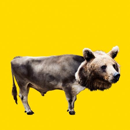Fashion collage minimal. Photo manipulation. Hybrid Bull and Bear. Funny art. Stock Photo