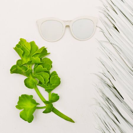 Tropical plant and sunglasses. White Minimal Style