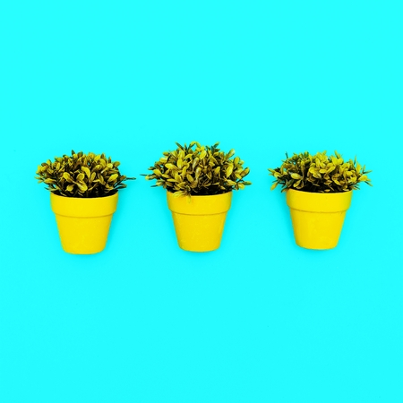 Decorative plants in pots minimal art style