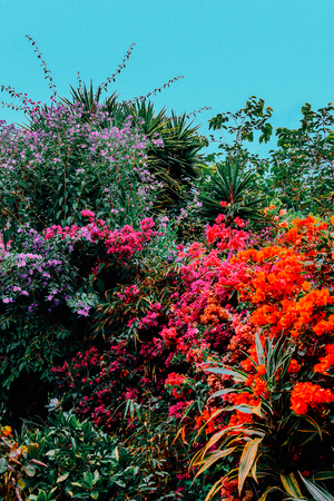Tropical flowers mix Canary island. Garden lover fashion concept Banco de Imagens