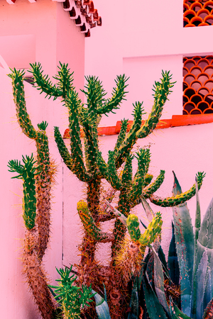 Cacti on pink. Plants on pink concept. Tropical location Banco de Imagens
