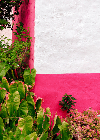 Plants on pink concept. Tropical stylish location. Tropical green. Canary island Banco de Imagens