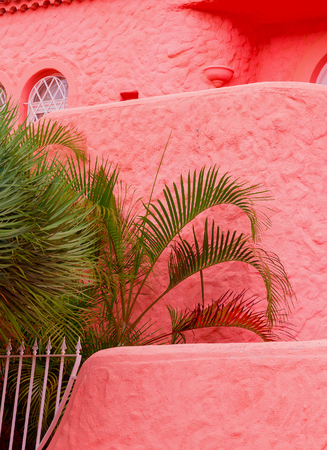 Tropical pink candy palm location. Plants on pink concept. travel vibes. Canary island