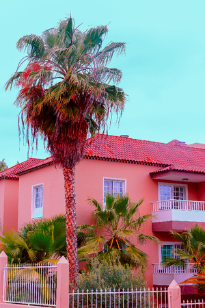 Tropical location. Canary island. Pink Palm Mood