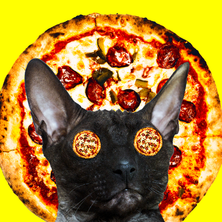 Cat pizza lover. Contemporary minimal collage. Funny Fast food art project
