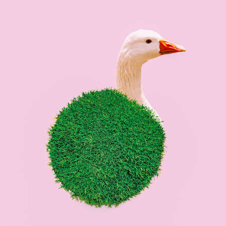 Modern design collage art. Flat minimal Vegan fashion concept. Goose and peace