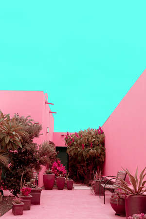 Minimal fashion plants on pink design. Cactus Palm. Canary Island Imagens