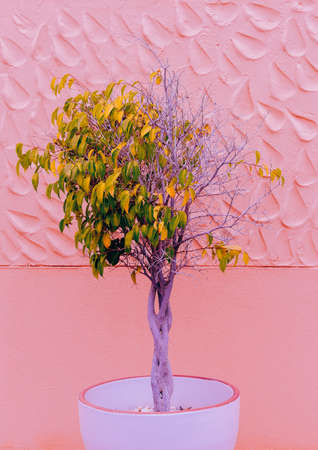 Fashion plants on pink design. Tree. Canary Island Nature