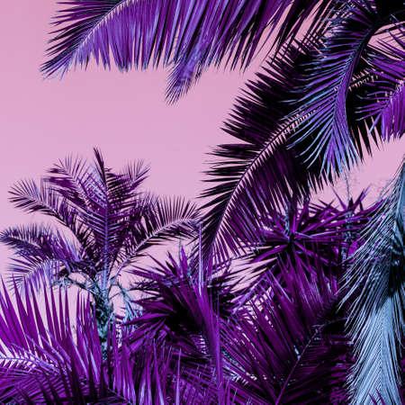 Palm fashion background. Creative colours art