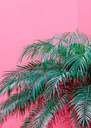 Minimal fashion plants on pink design. Palm lover. Canary Island