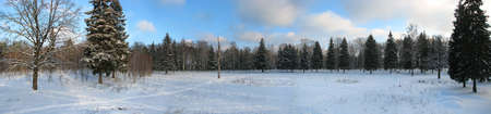 clear path: russian winter wild landscape. wide panoramic view