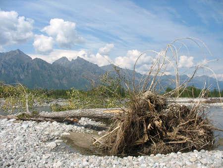 taiga: Taiga. Siberia. asian mountain landscape 2