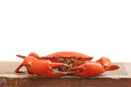 Delicious Mud Crab  on wooden table photo