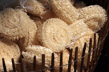 luffa: group of luffa sponges