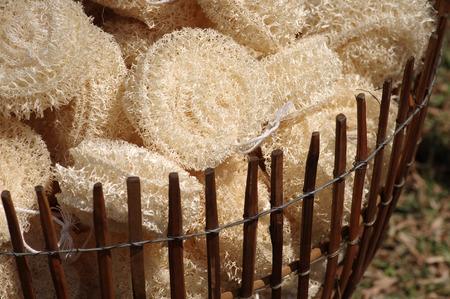 luffa: luffa sponges