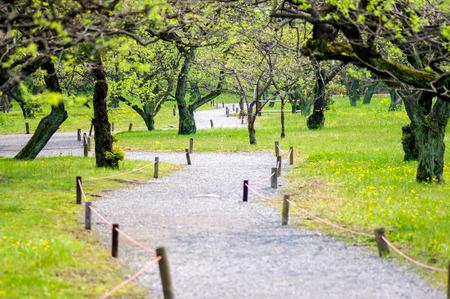 sylvan: Garden pathway