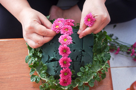dasiy: Female hand arrange dasiy flower for decorate Stock Photo