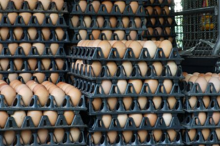 egg in tray ready for sell photo