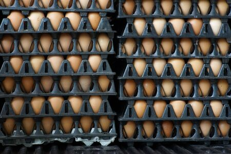 egg in tray ready for sell