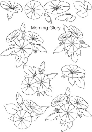 Patterns Morning Glory with line Vector