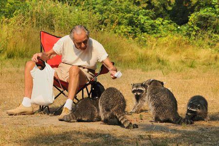 raccoons: Old man feeding raccoons Stock Photo