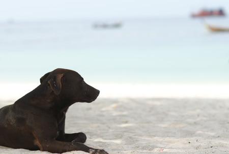Poor Homeless Dog sitting on the beach looking outside 版權商用圖片