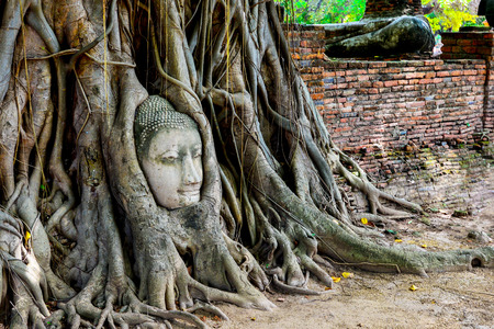 This head of Buddha is covered with roots of a tree at Wat Mahathat, Ayuthaya, Thailand photo