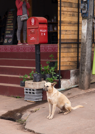 small butt: Thai dog waiting for his owner Stock Photo
