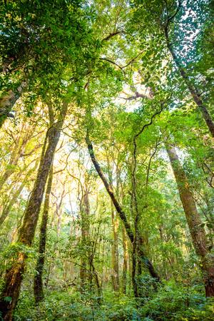 bos bomen. natuur, groen, hout zonlicht achtergronden.