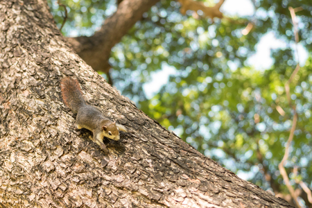 clinging: Squirrel clinging on a tree.