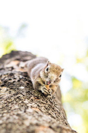 squirrel: Squirrel clinging and eating nuts on a tree.