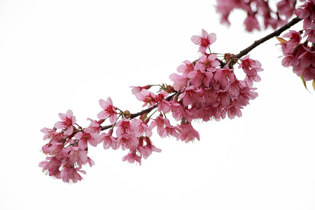 slower: pink flower
