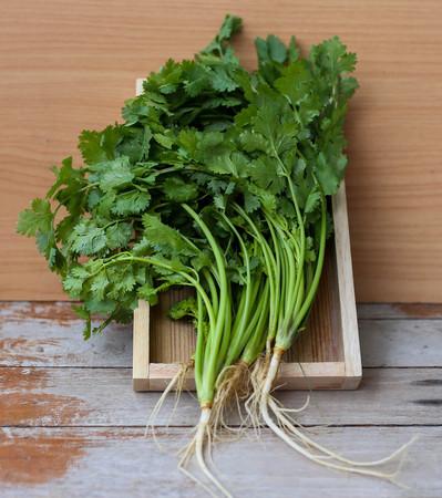cilantro: hojas de cilantro con fondo de madera