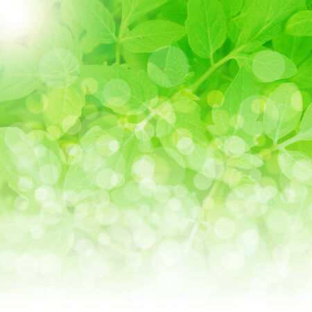 clean environment: Summer branch with fresh green leaves,fresh green leaves background