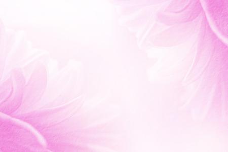 Schöne Blume und süße Farbe in Soft-Fokus auf Maulbeer Hintergrund.