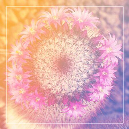 cotizacion: Cita de la inspiración motivación Vida en la flor del cactus en el fondo de enfoque suave con la imagen filtrada. Cita fe.
