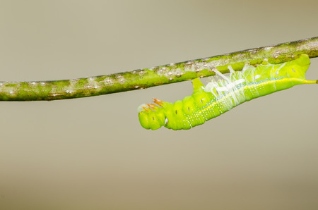 molting: insect molting