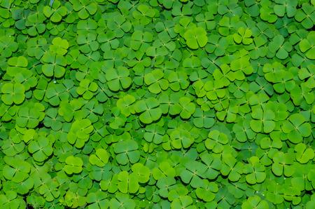 Verdure verdi Archivio Fotografico - 36917266