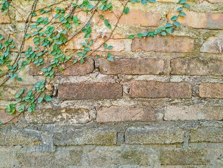 old brick wall: Old brick wall climber
