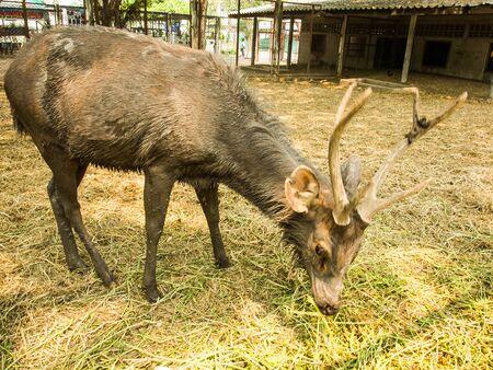 siloette: deer