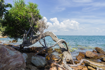 blue widescreen widescreen: Trees and Stone in sea with blue sky. Stock Photo