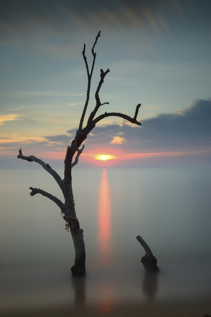 lonesomeness: tree in the middle of sea during sunset