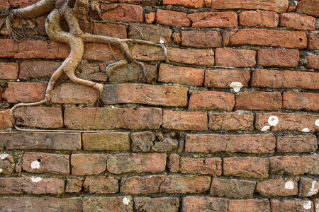 large tree: orange brick wall with ancient root tree