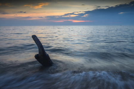 lonesomeness: Tree stumps in the middle of sea during sunset