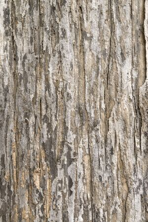 detailed: Tree Bark. Detailed Texture effect.